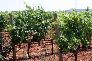 4 vinos únicos españoles que deberías estar bebiendo ahora mismo