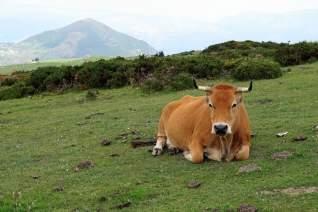 6 Vistas espectaculares en Asturias.