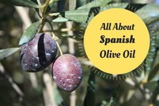 Todo sobre el aceite de oliva español