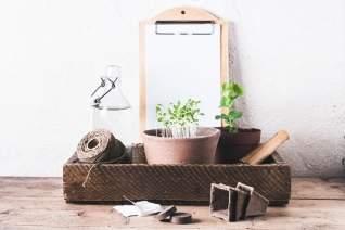 Guardando semillas de tu jardín