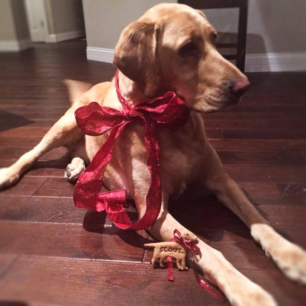 perro con cinta roja atada alrededor