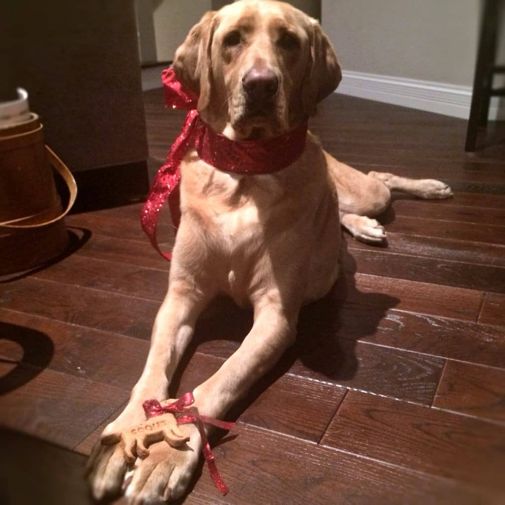 perro con galletas caseras para perros